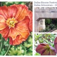 i've been working on a series inspired by my 2011 visit to the Dallas Blooms Festival at the Dallas Arboretum for the last couple of months. the series includes three 6″ x 9″ paintings and three 3″ x 4″ paintings – using some of my photos as references.